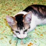 Stray Cats in Adoption