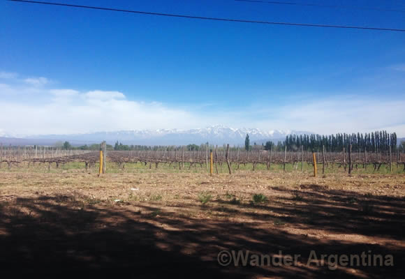 A vineyard in Mendoza Argentina