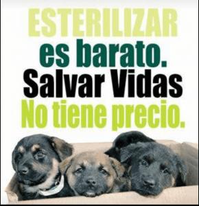 A poster with puppies that says 'Esterilizar es barato. Salvar Vidas no tiene precio' (Sterilizing is cheap. Saving Lives has no Price')
