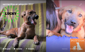 A dog named Lucky in adoption at the Buenos Aires animal shelter, Sociedad Protectora de Animales Sarmiento
